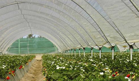Plásticos y mallas para invernaderos y jardinería